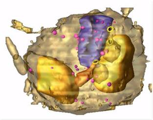 rendered model showing the digestive system of the malaria parasite