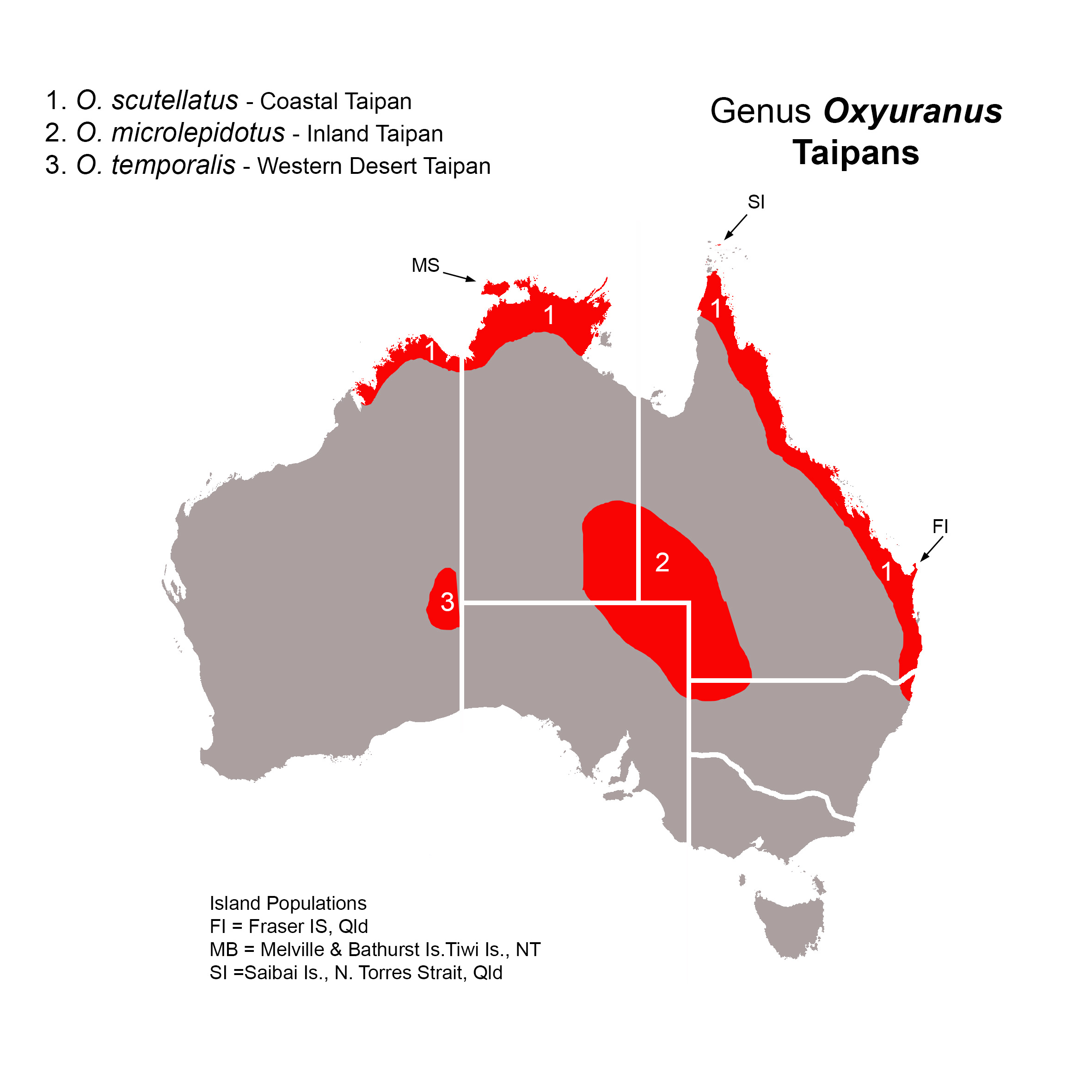 an introduction to the analysis of the oxyuranus microlepidotus The report contains an analysis of the venom of the inland taipan, along with its medical uses the inland taipan the oxyuranus microlepidotus (inland taipan) is a member of the family elapidae (elapid snakes), and belongs to the genus oxyuranus.