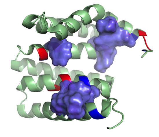 model showing protein structure