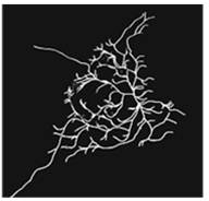 3D-MT association assay showing CLSM image