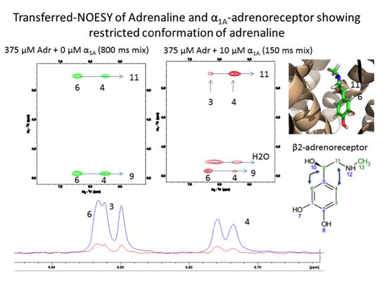 scheme showing restricted conformation of adrenaline