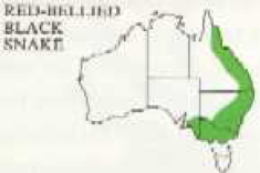 distribution map for red bellied black snake