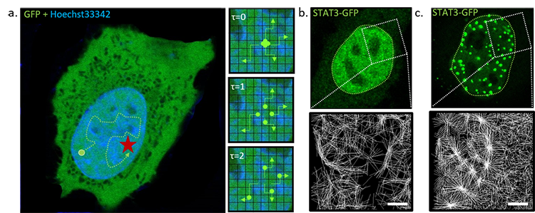 imaging transcription factor diffusion in a living cell