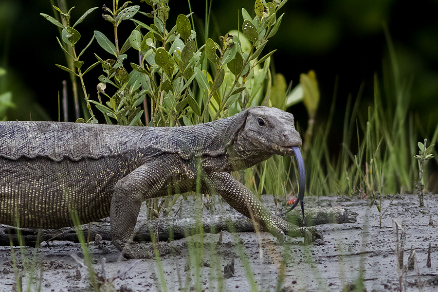 water monitor