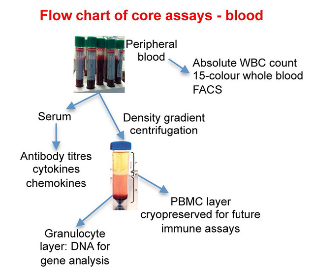 flow chart of core assays-blood