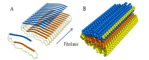 Structural model of apoC-II amyloid fibrils.