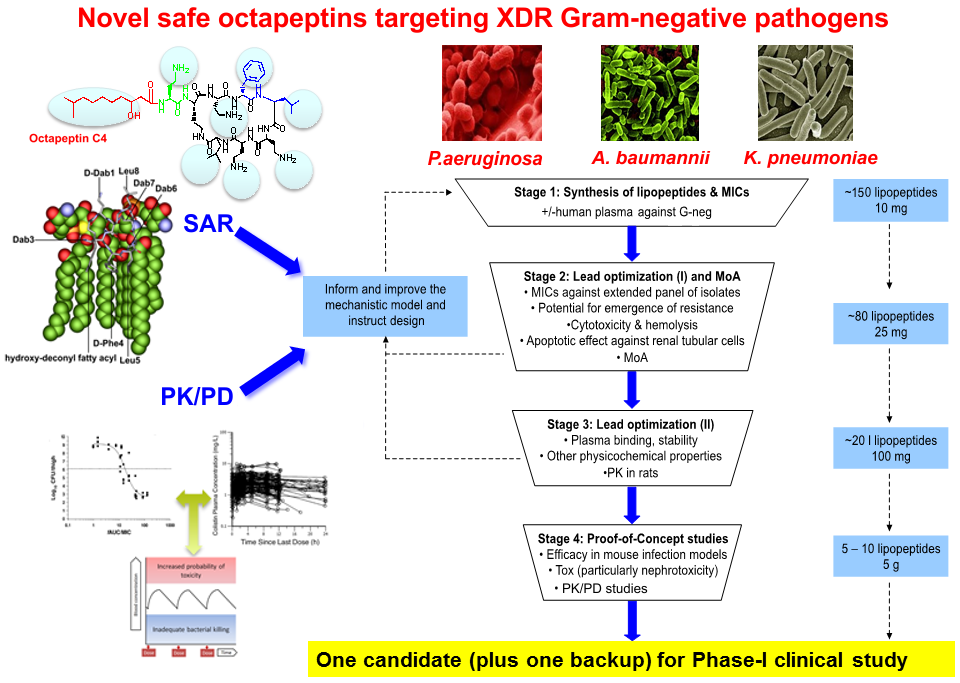 Figure 1: Flow chart of novel safe octapeptins targeting XDR Gram-negative pathogens