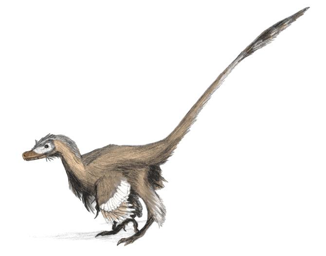 Velociraptor feathers