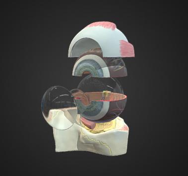Interactive eye image