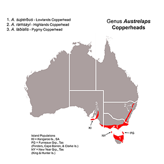 Distribution map of Copperhead Snakes